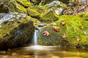 Tranquil forest stream in autumn forest