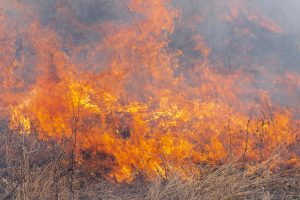 The current approach is leaving millions of acres at risk of megafires
